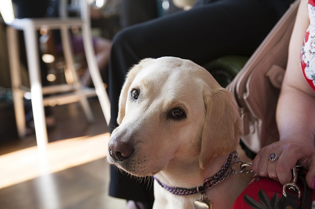 Guide Dogs 'First Blind Dates'